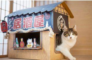 Cute Japanese Izakaya Restaurant Cat House
